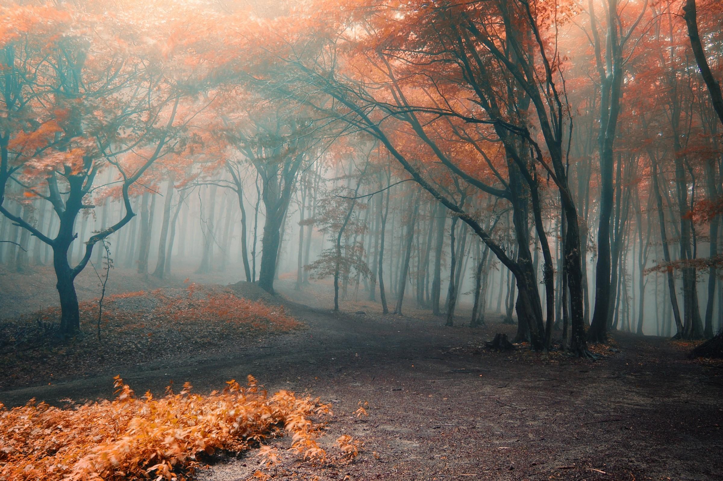 Autumn mist - Shutterstock free image47808574 - 2013-0916